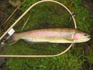 Devon rainbow 100409